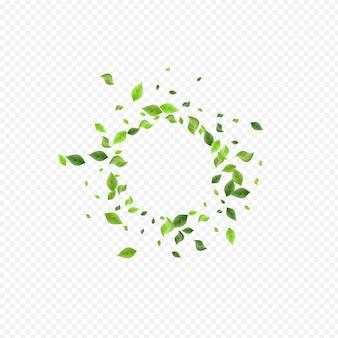 A floresta deixa a bandeira transparente do fundo do vetor do vento. fronteira de folhagem de mosca. ilustração orgânica da vegetação do pântano. papel de parede do redemoinho da folha.
