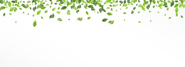 A floresta deixa a borda do fundo branco panorâmico do vetor da árvore. ramo de folhagem de primavera. projeto abstrato das hortaliças de cal. folheto folha fresca.