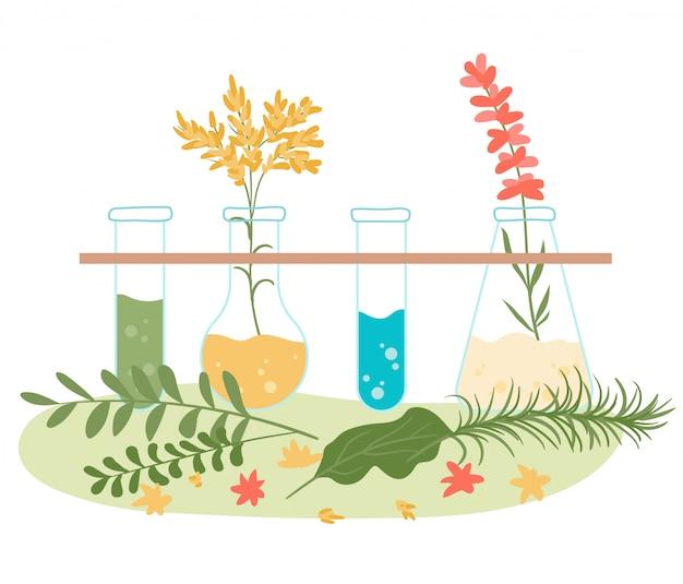 A homeopatia e o tratamento herbal natural, ervas naturopathic da saúde extraem a coleção isolada na ilustração lisa branca.
