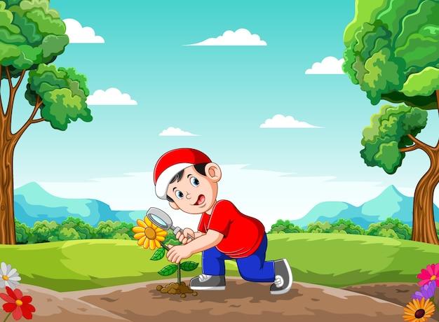A ilustração do menino é a análise da flor do sol no jardim