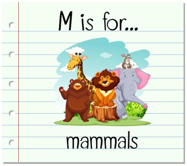 A letra m do flashcard é para mamíferos