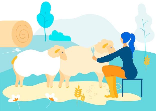 A mulher senta-se na cadeira corta ovelhas. lã natural.