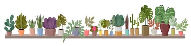 A prateleira com plantas domésticas é longa