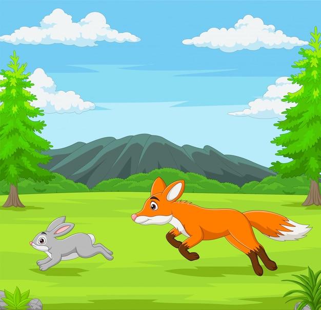 A raposa está perseguindo um coelho em uma savana africana