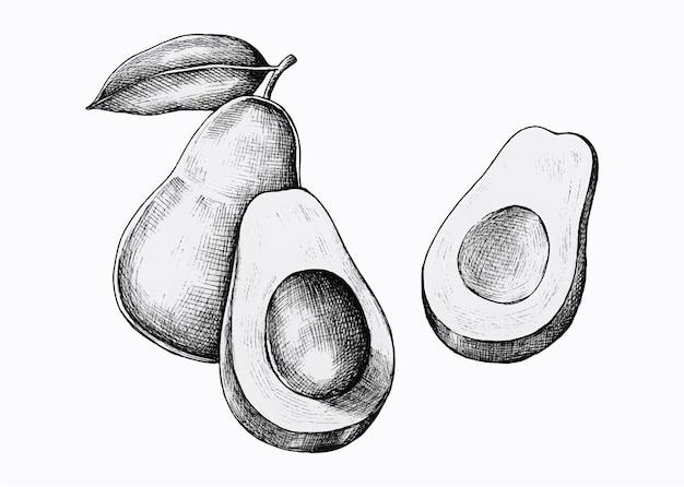 Abacates frescos desenhados à mão