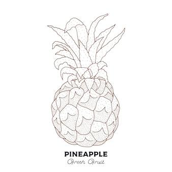 Abacaxi. botânica vintage mão ilustrações desenhadas. estilo de desenho.
