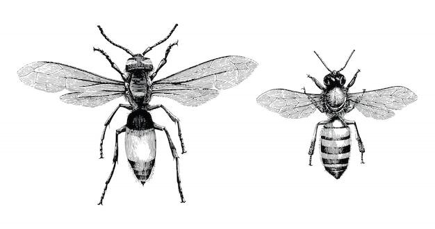 Abelha e vespa mão desenho ilustração gravura vintage isolar no fundo branco