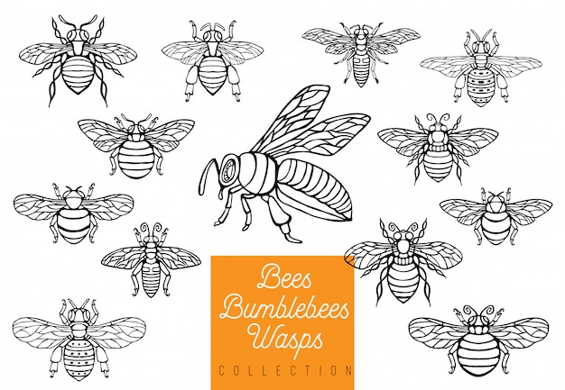 Abelhas de abelhas mel abelhas definir esboço estilo coleção inserir asas emblema símbolos mão desenhada gravura ilustração