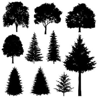 Abetos coníferas e decíduas floresta vector conjunto de silhuetas