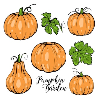 Abóbora para o halloween com folhas verdes e tipografia, esboço desenhado à mão