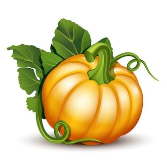 Abóboras com folhas isoladas no fundo branco. ilustração abóbora laranja madura - abóbora para o halloween, festival da colheita de outono ou dia de ação de graças. legumes ecológicos.