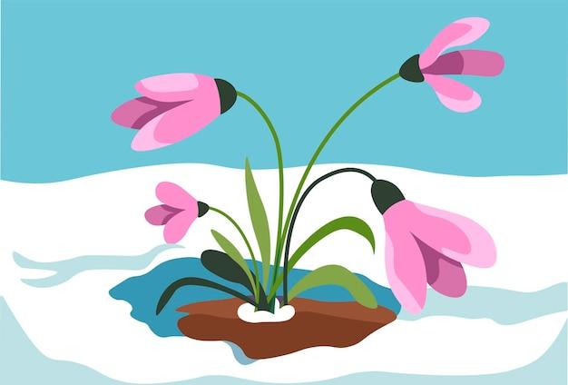 Açafrão crescendo na neve, vetor da temporada de primavera
