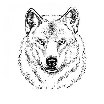 Açaime o lobo isolado no fundo branco, ilustração.