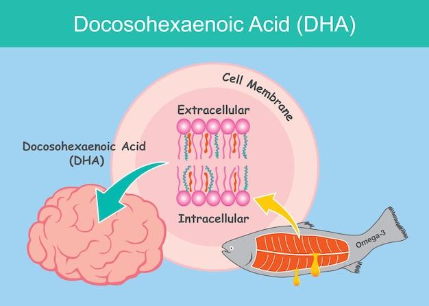 Ácido docosohexaenóico (dha). ilustração que mostra o benefício do ácido dha para as células cerebrais de uma criança