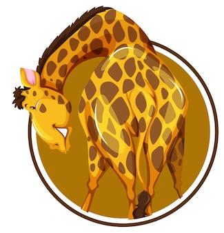 Adesivo de girafa isolado no fundo branco