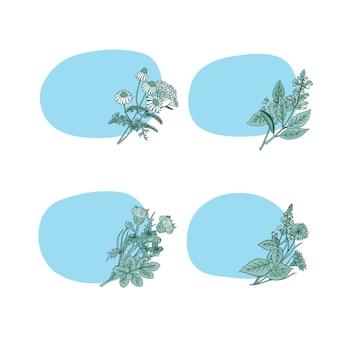 Adesivos de ervas medicinais desenhados à mão