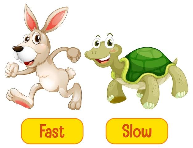 Adjetivos opostos com palavras rápidas e lentas