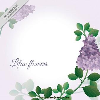 Adorável flores lilás fundo