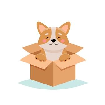 Adote um animal de estimação - cachorro fofo em uma caixa, sobre fundo branco