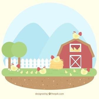 Agradável, fundo, celeiro, galinhas
