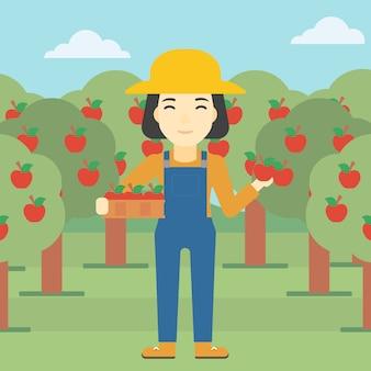Agricultor coletando maçãs