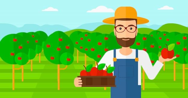 Agricultor coletando maçãs.