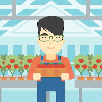 Agricultor coletando tomates