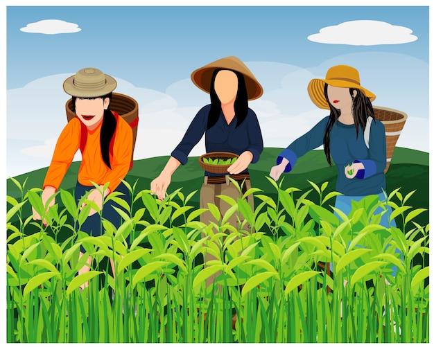 Agricultor com licença de chá