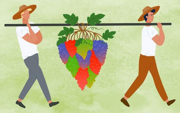 Agricultores, carregando cachos de uvas, colheita de bagas