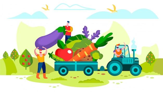 Agricultores, carregando vegetais maduros em reboque de trator