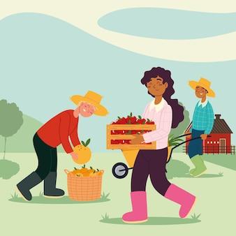 Agricultores colhendo frutas
