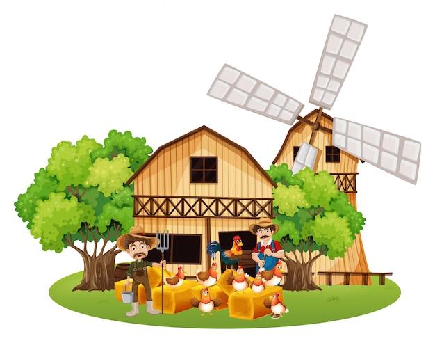 Agricultores e galinhas na fazenda