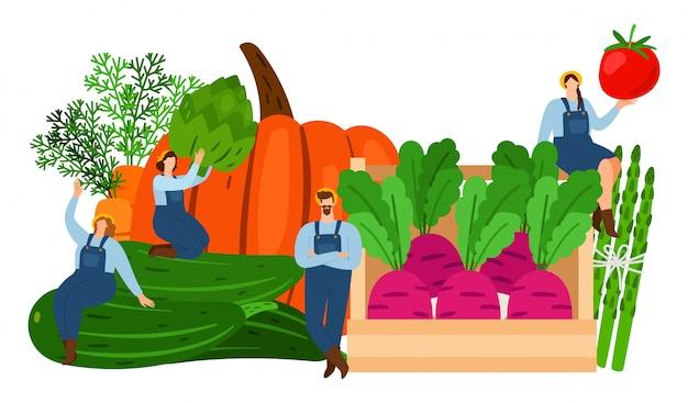 Agricultores e vegetais. ilustração em vetor tempo da colheita.