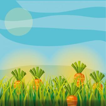 Agricultura plantação vegetal cenoura