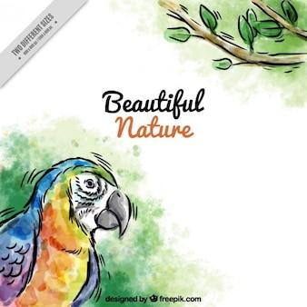 Aguarela desenhada mão de fundo papagaio
