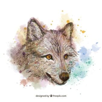 Aguarela, fundo da cabeça do lobo