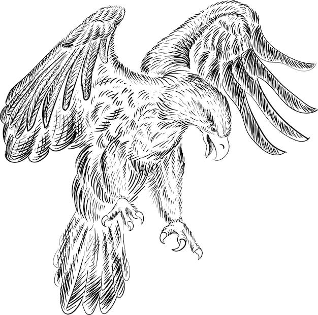 Águia de estilo de caça