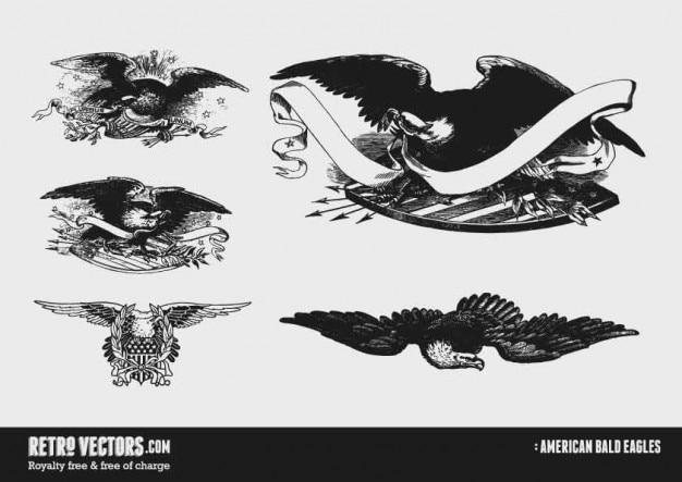 Águias americanas americanas