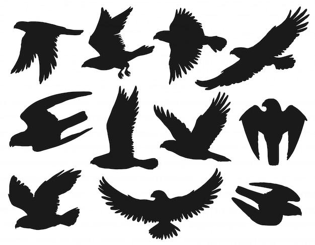 Águias e falcões silhuetas negras, pássaros