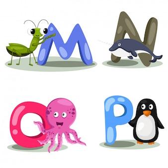 Alfabeto animal ilustrador letra - m, n, o, p