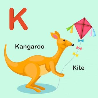 Alfabeto animal isolado de ilustração letra k-kite, canguru
