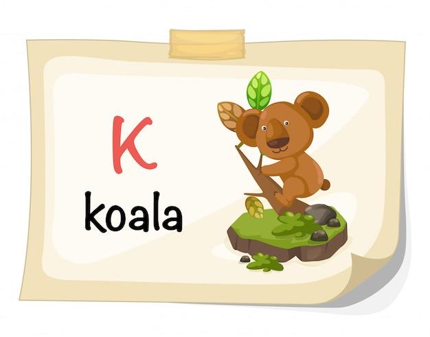 Alfabeto animal letra k para vetor de ilustração de coala