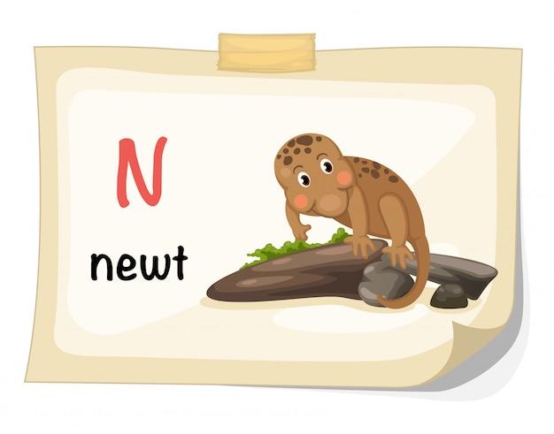 Alfabeto animal letra n para vetor de ilustração newt