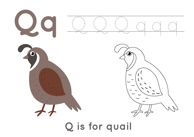 Alfabeto para colorir para crianças. atividade básica de redação. planilha de letras abc de rastreamento. letra q com codorna fofa.
