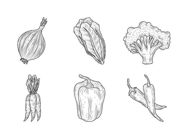 Alface, cebola, brócolis, cenoura, pimenta, vegetais, fresco, orgânica, natureza, estilo, desenhado mão