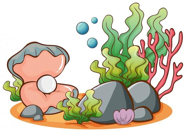 Algas e pérolas no fundo branco