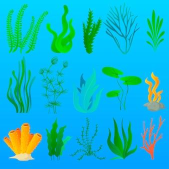 Algas e plantas marinhas de aquário