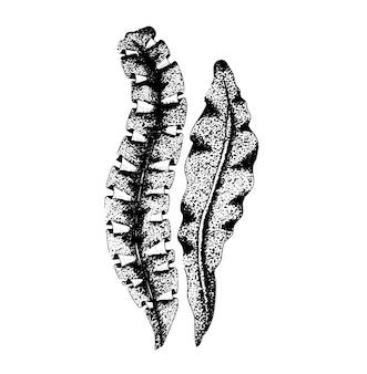 Algas marinhas desenhadas à mão