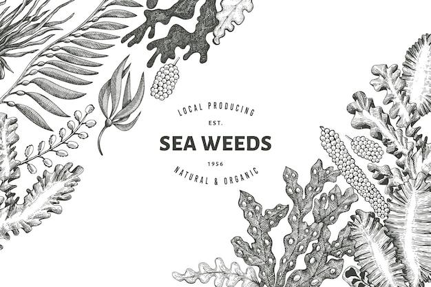Algas marinhas. mão-extraídas algas. frutos do mar gravados