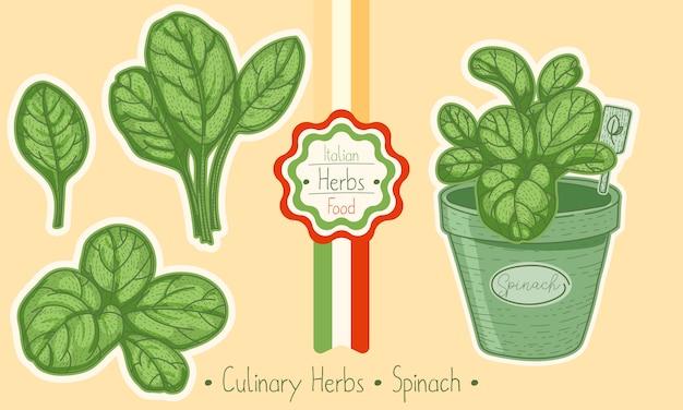 Alimento e erva culinária espinafre